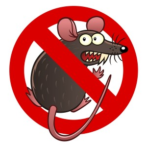Rodent Insurance Coverage for your car in Kirkland, Washington